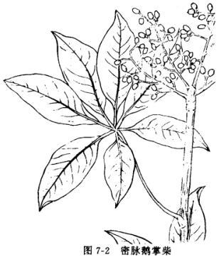 莲分解结构图